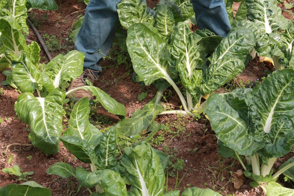 Promueven consumo de hortalizas orgánicas en comunidad universitaria