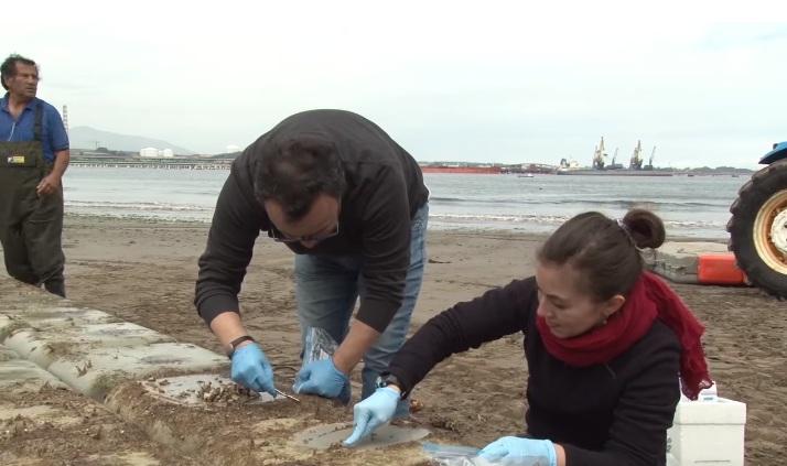 Bacteria degrada sobre 90% de hidrocarburos y contiene metales pesados en medio marino